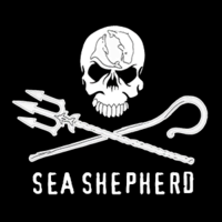 Nico seashepherd