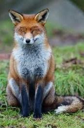 uS|Fox