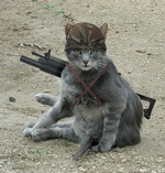 Enlist in Apocalypse Meow 33-21