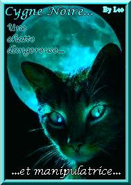 Cygne Noire