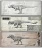 Gallery T_rex_10