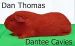 dantee