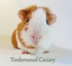 Timberwood Caviary