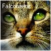 Falconwing
