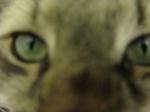 Catsuo