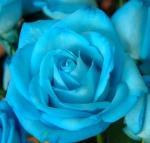 Blueprincess1116