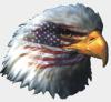 American_Bob