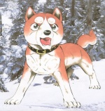 sara the wolf