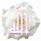 Nour_