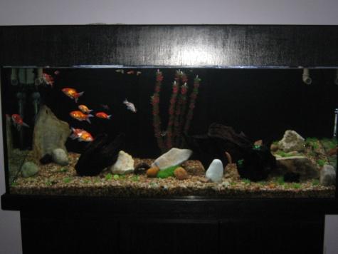 aquario de kinguios