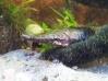 Meu Aquario de Predadores