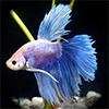 Artigos AquaPeixes 4697-55