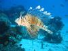 Aquarismo Marinho 6520-26