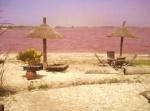 Cauri des sables