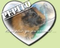 dream-of-guinea-pig