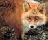 foxhole06