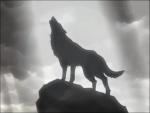 Sara-wolf