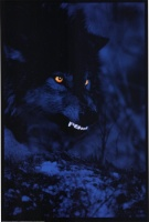 [>B<]bittnbywolffee
