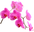 TongGiang