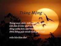 Quán thơ 3317-93