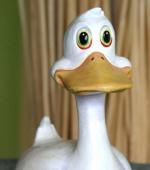 Bob the Duck