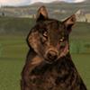 timberwolf73