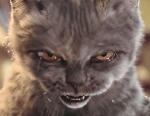 chaton2cam