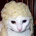 noodle6491
