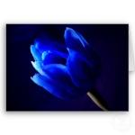 *TulipeBleue*