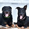 Shinzo