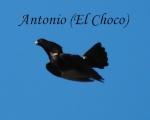 ANTONIO ALARCON