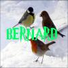 Bernard17