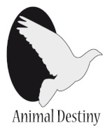 Animal-Destiny