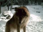 Sheawolf88