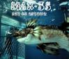 max-35