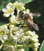 Jean Léz'abeilles