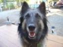 Woofhound