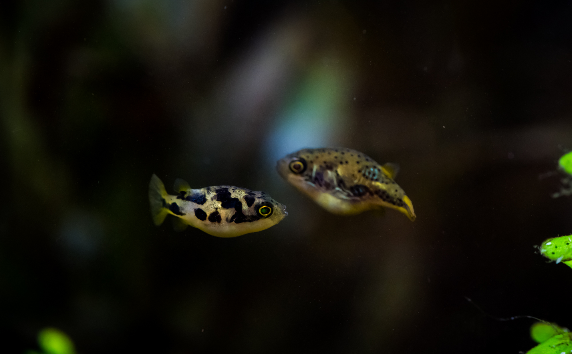 Recueil de photo aquariophiles de qualités Dsc_2011