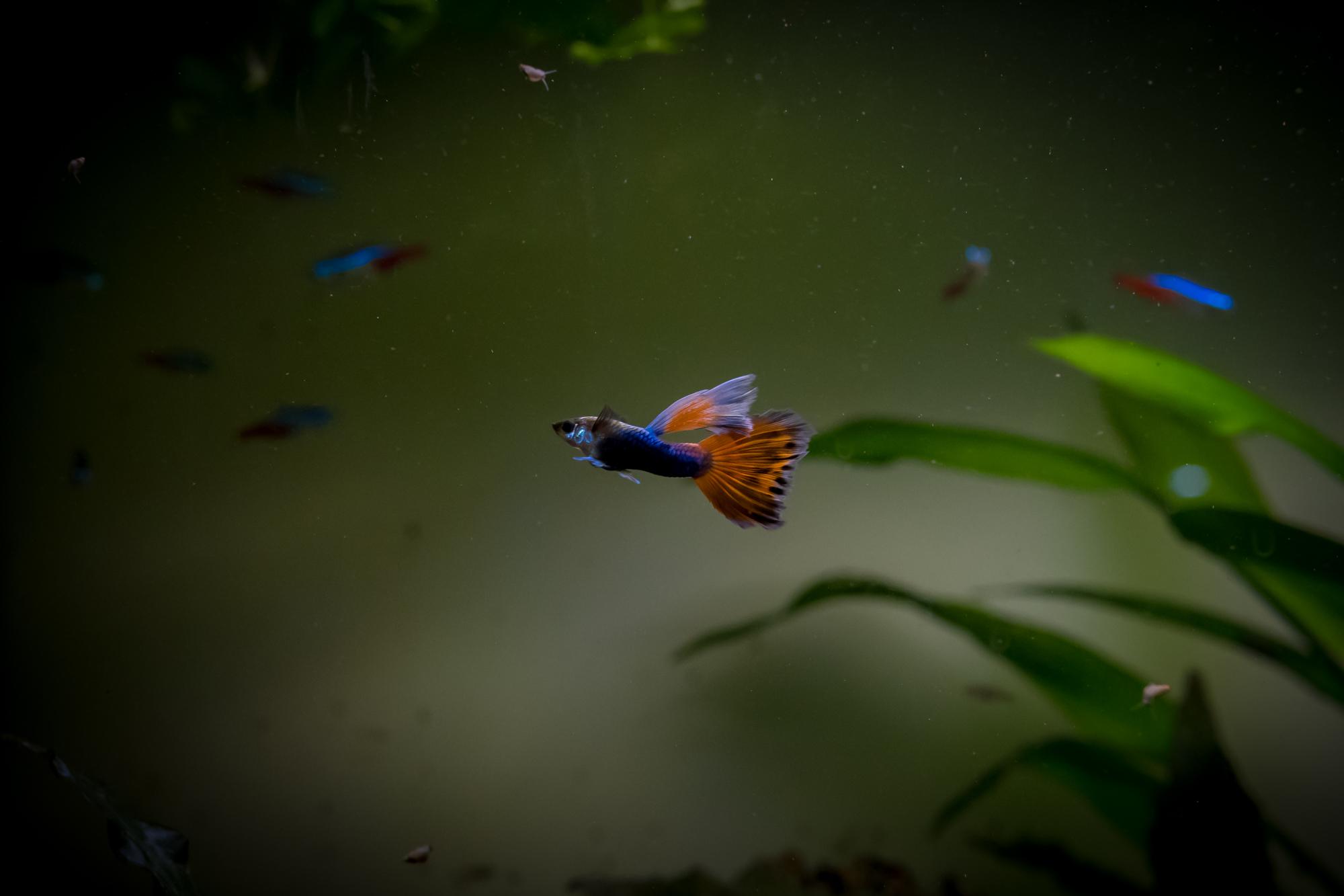 Recueil de photo aquariophiles de qualités Dsc_2312