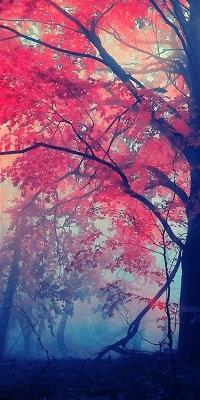 Chant de la Forêt