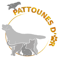 Pattounes d'or