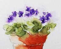 violetaafricana