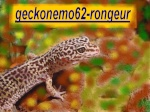geckonemo62-rongeur