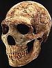 Neandertaloide