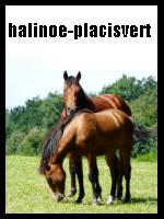 halinoe-placisvert
