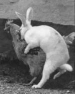 sillywabbit