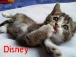 Disneycatlove