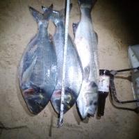 fishingforfun