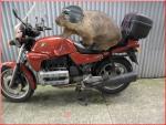 wombat2540