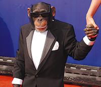 mico mandante